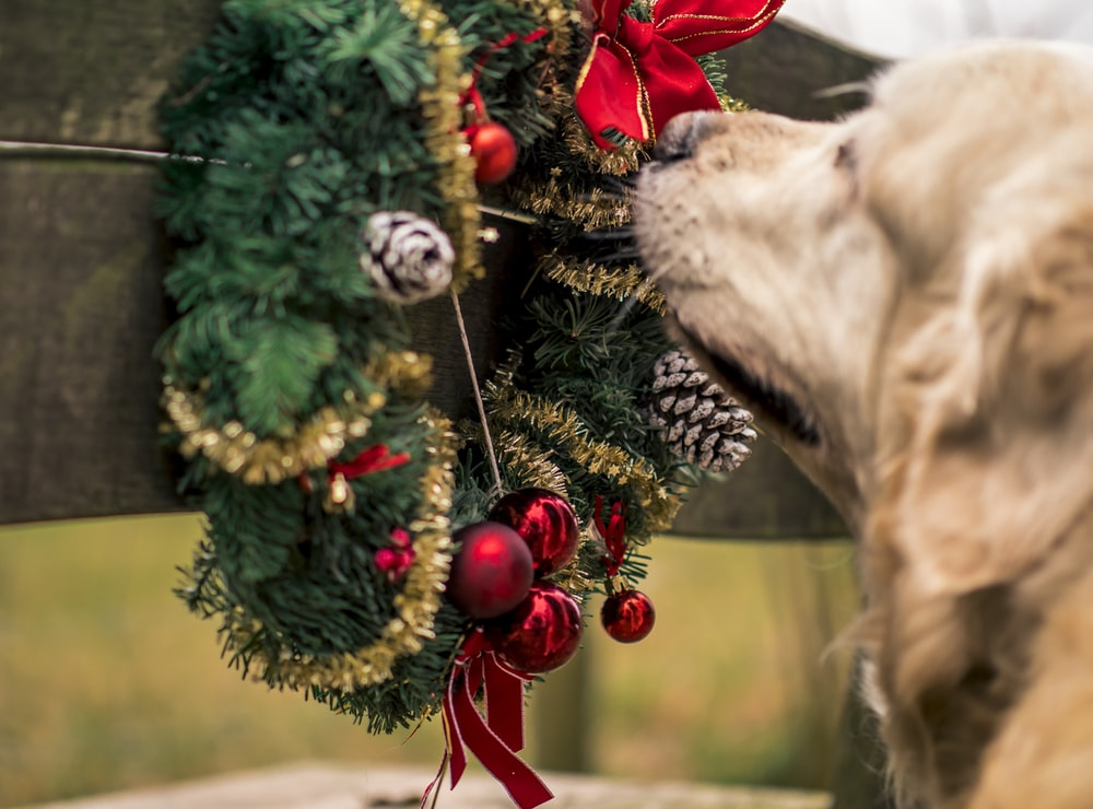 dog smelling garland wreath