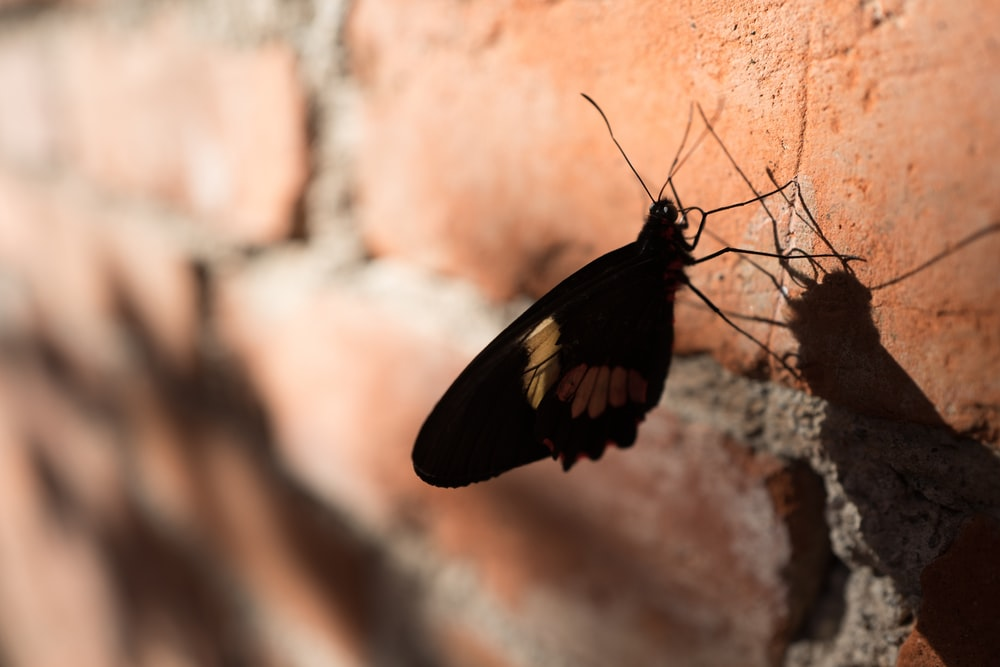 butterfly perching on brick wall