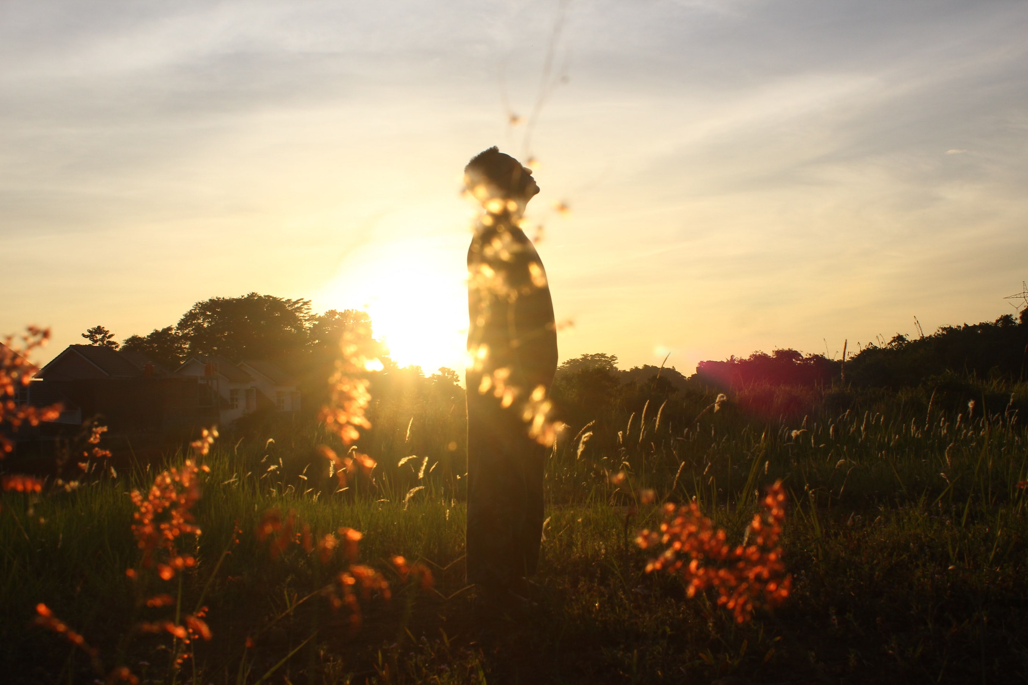 silhouette of person standing on field while staring above
