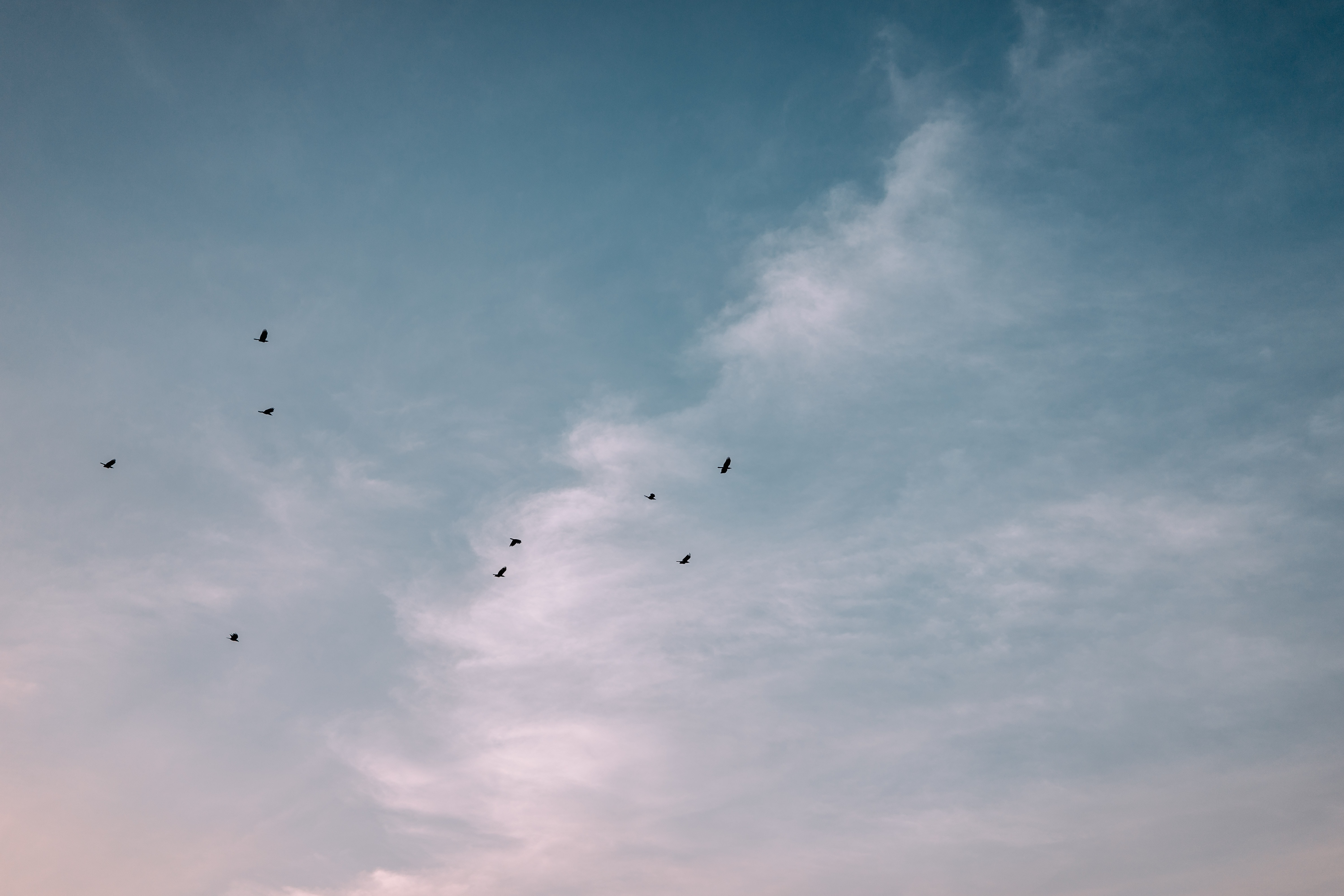 flock of birds flying over the clouds
