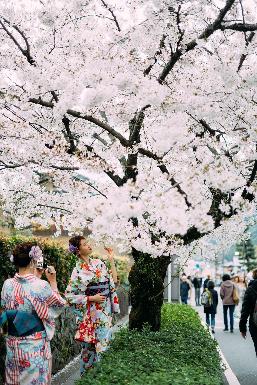 white flower trees