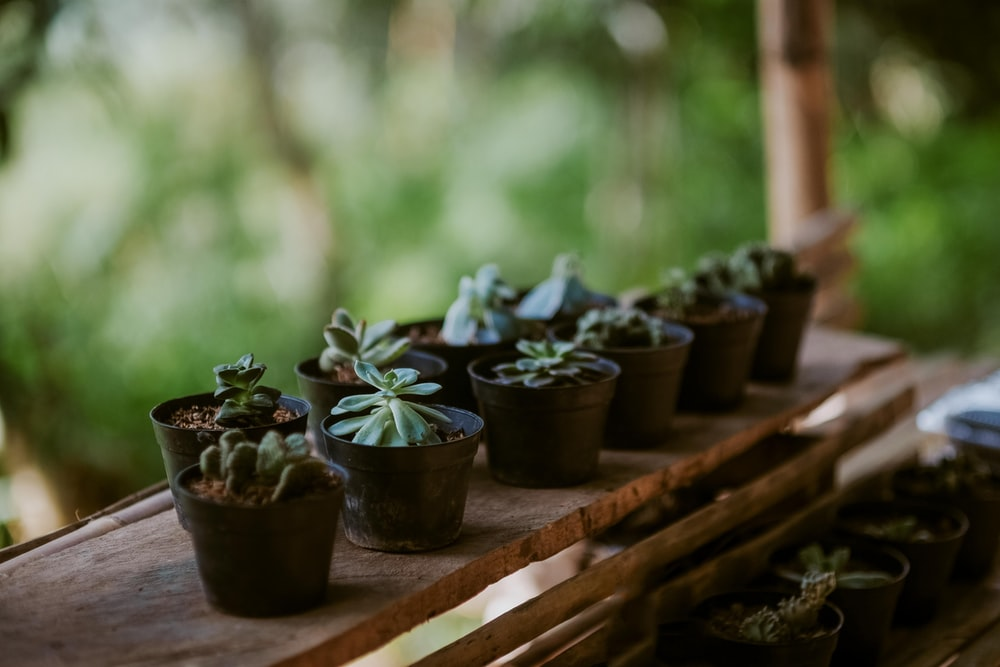 variety of succulent plant