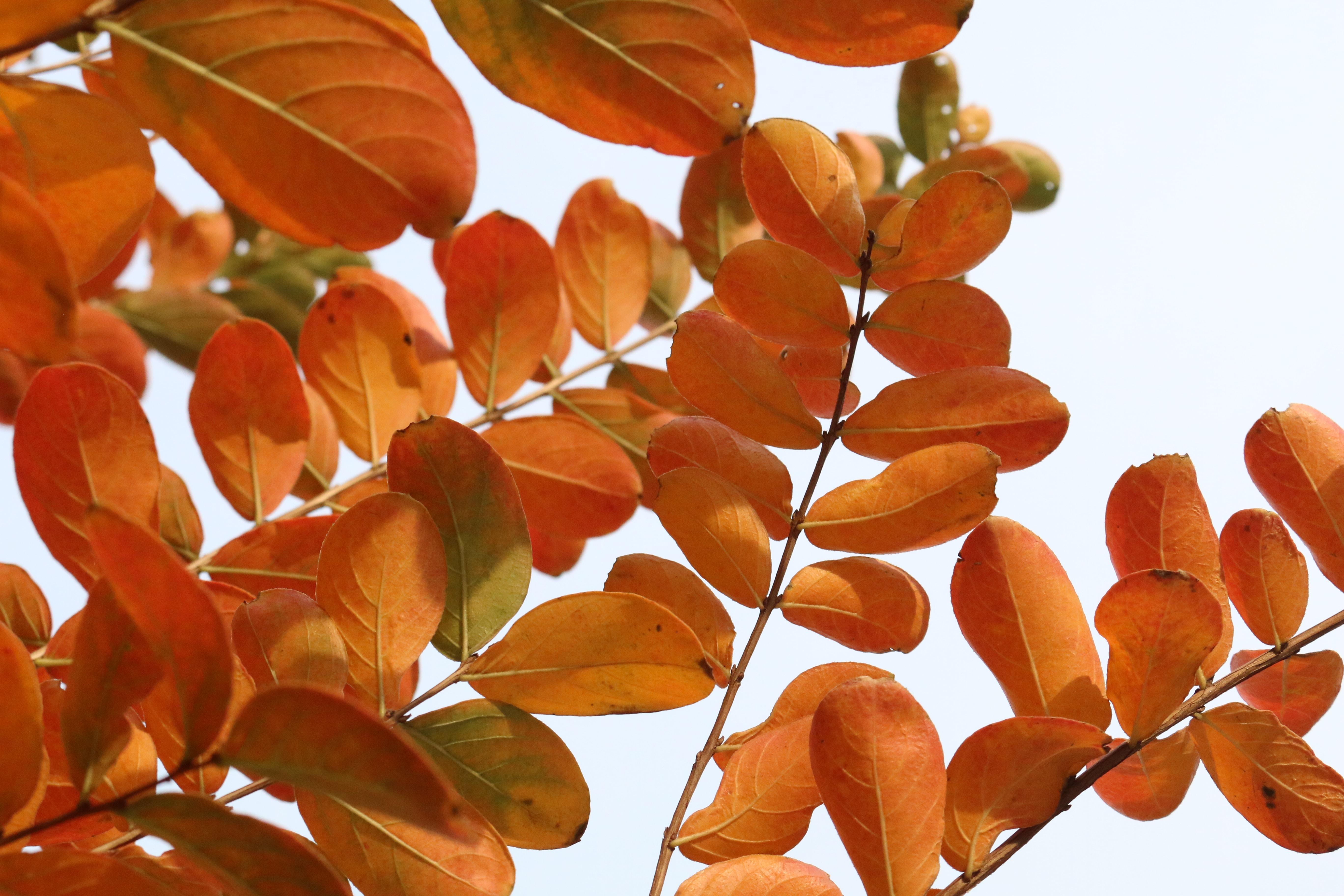 photo of orange leaf tree