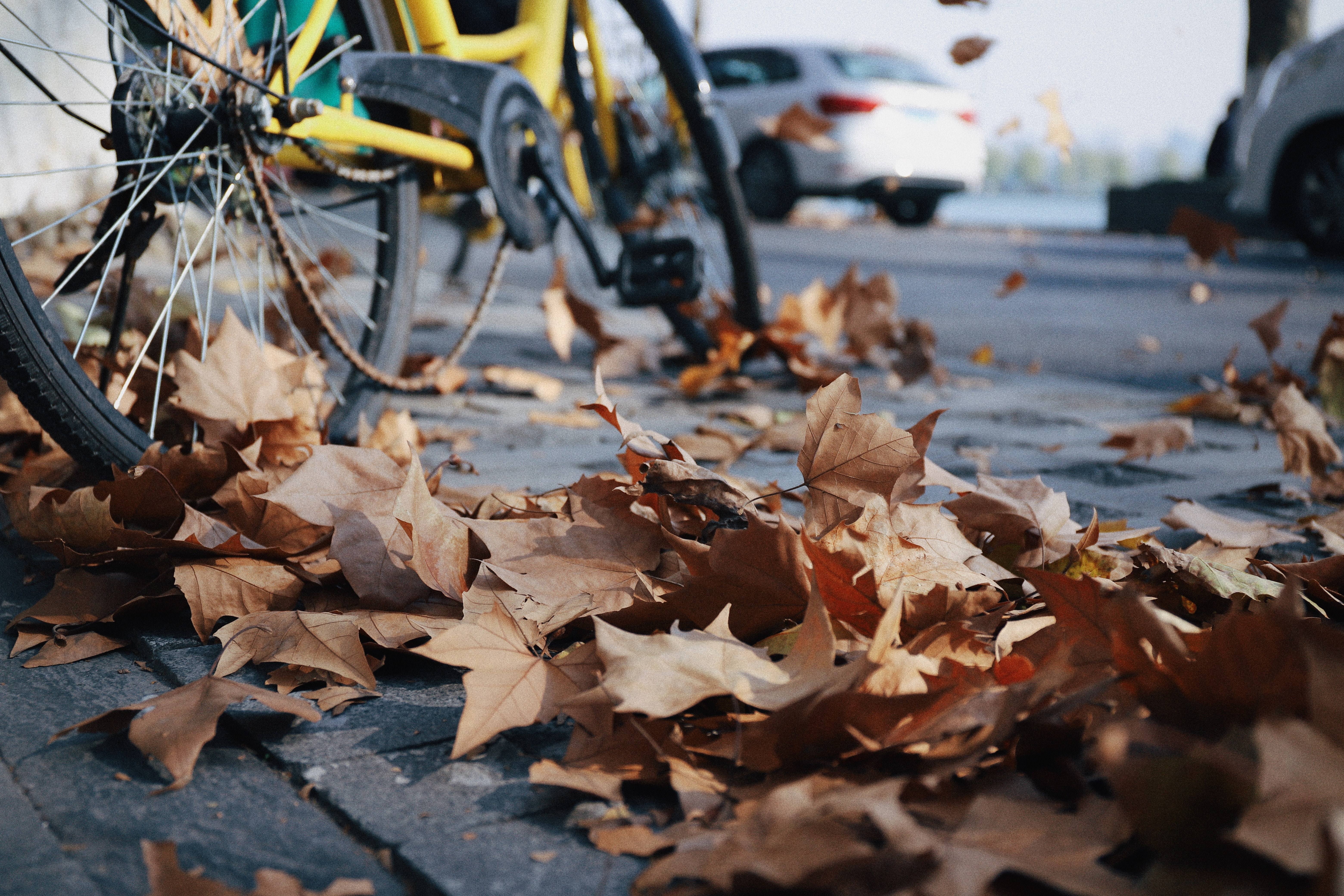 withered leaves on gray pavement at daytime