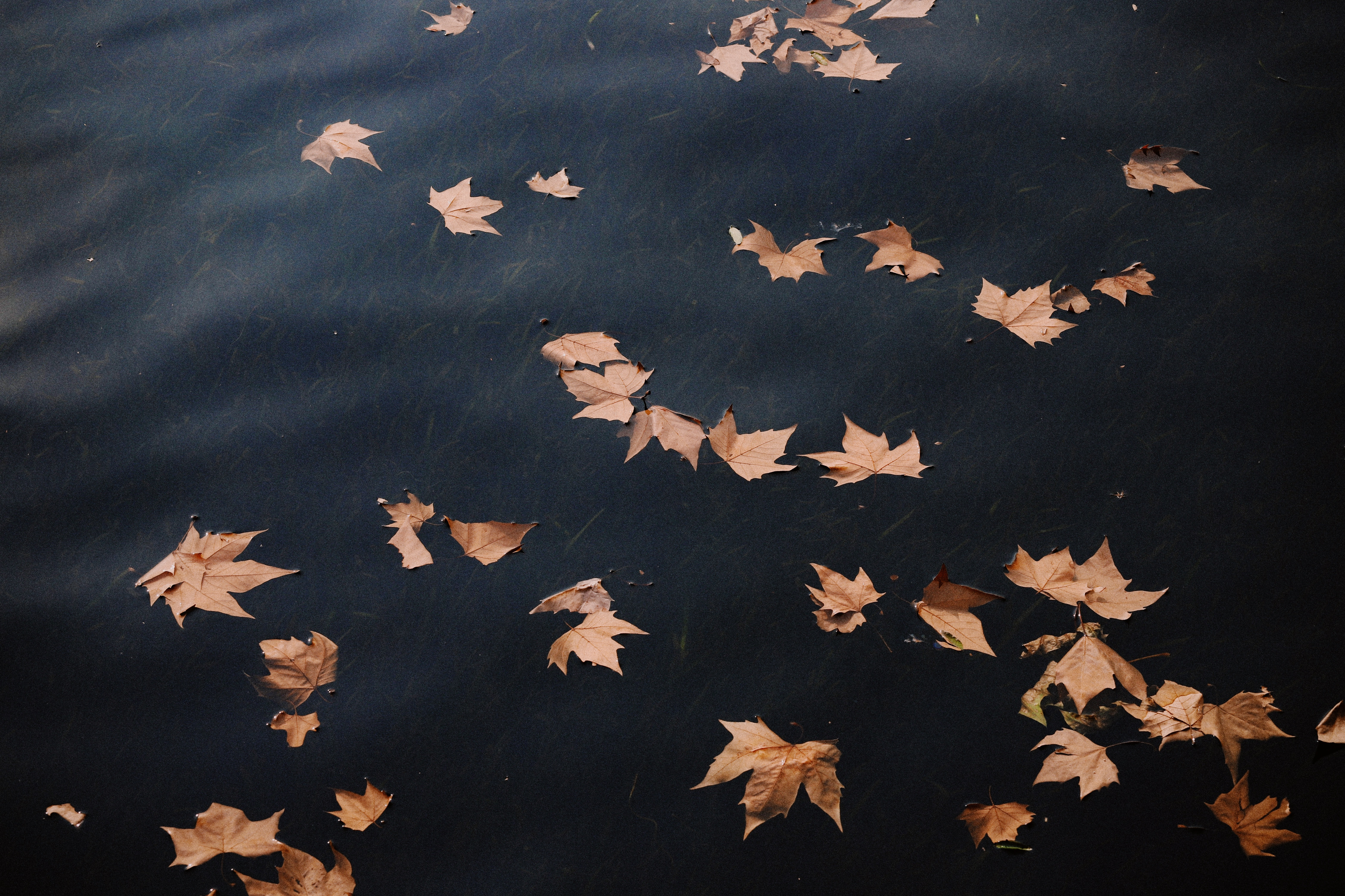 brown leaves floating on body of water