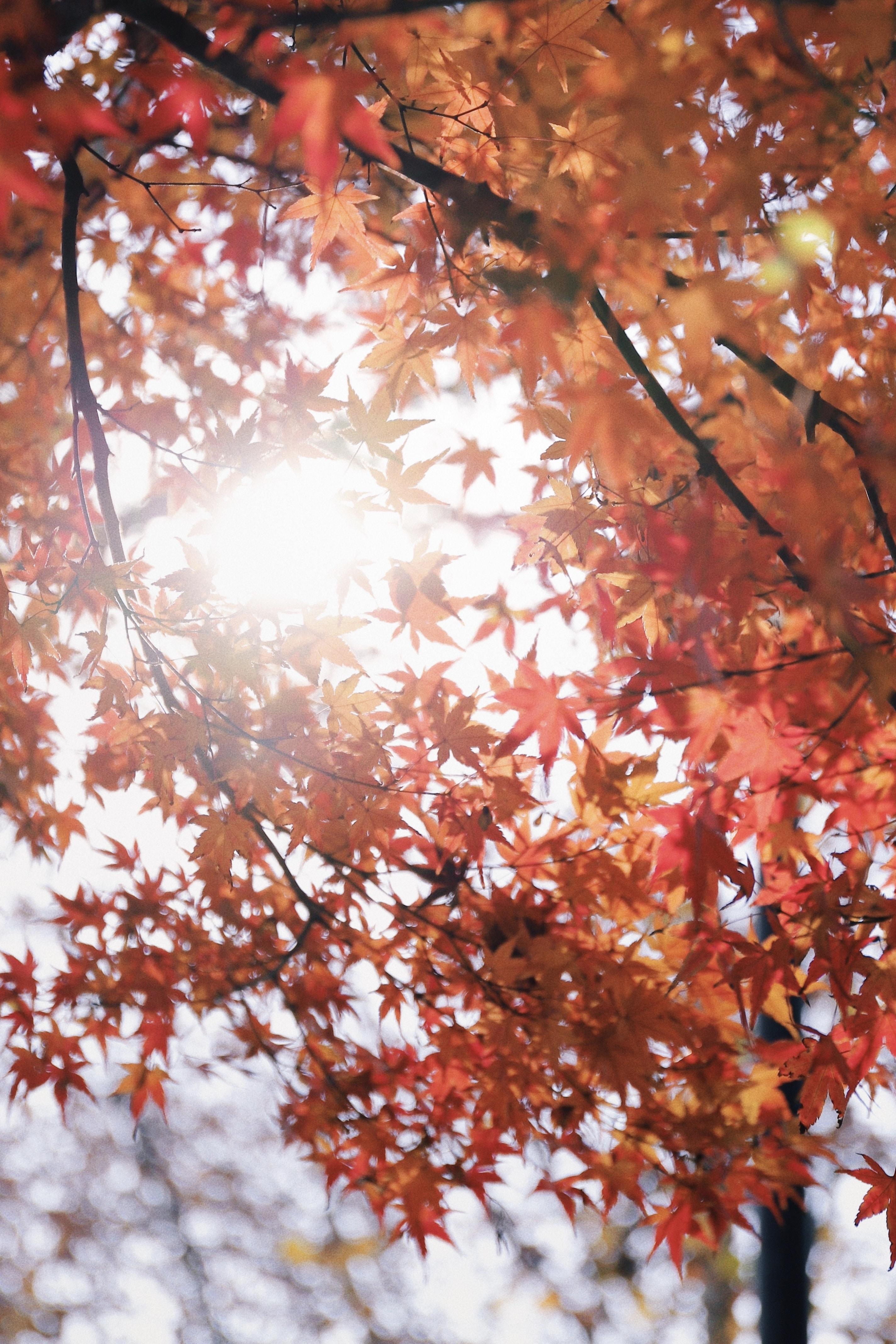 low angle photography of orange leaf trees