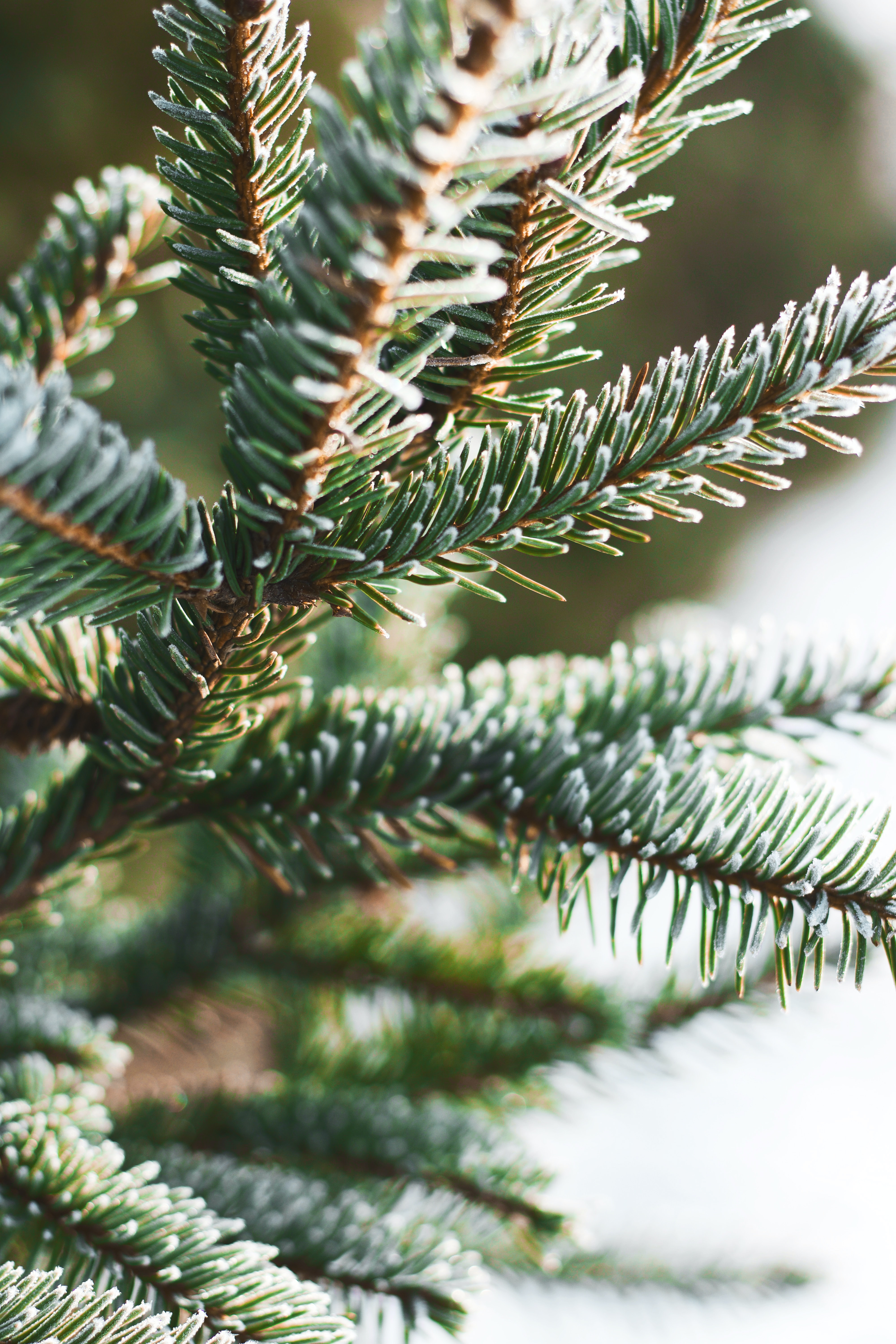 green pine tree close-up photography