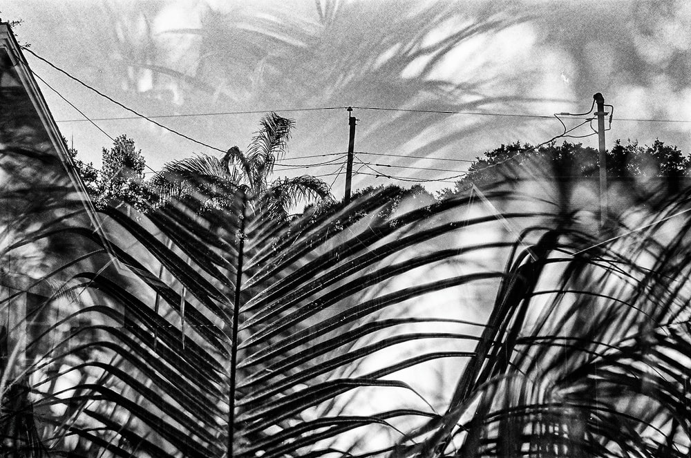 greyscale photo of plants