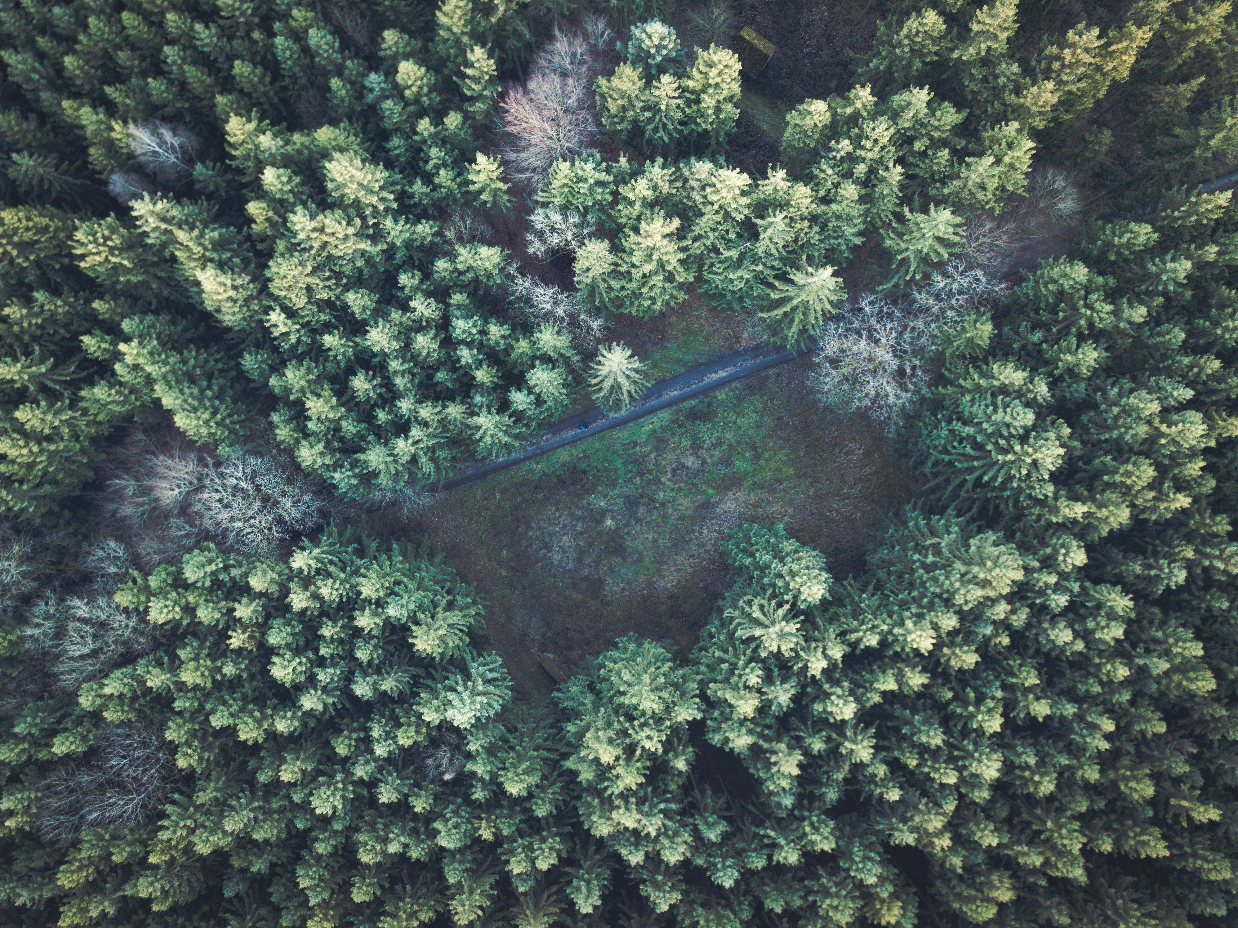 pine trees in aerial photography