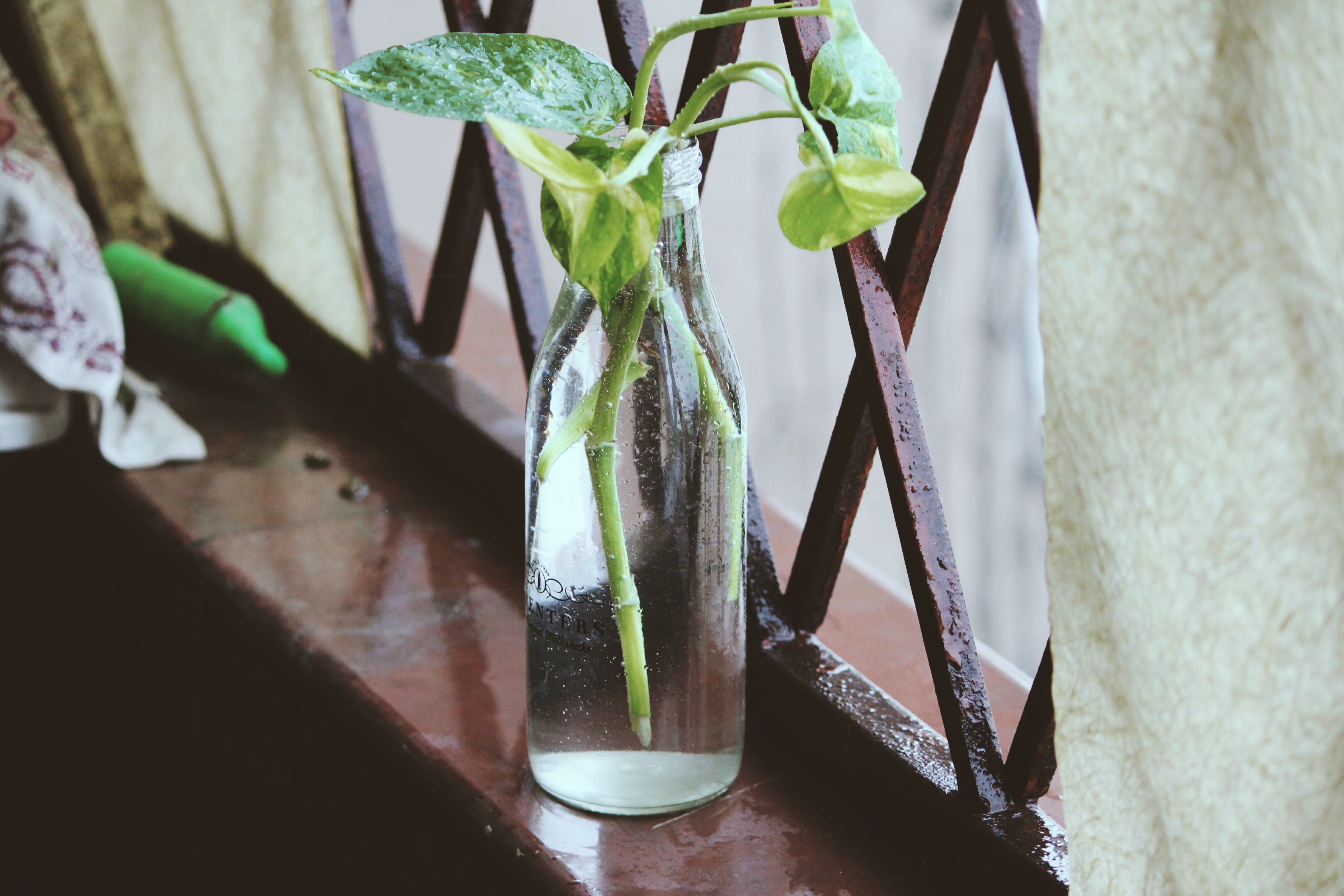 green plants on clear glass vase