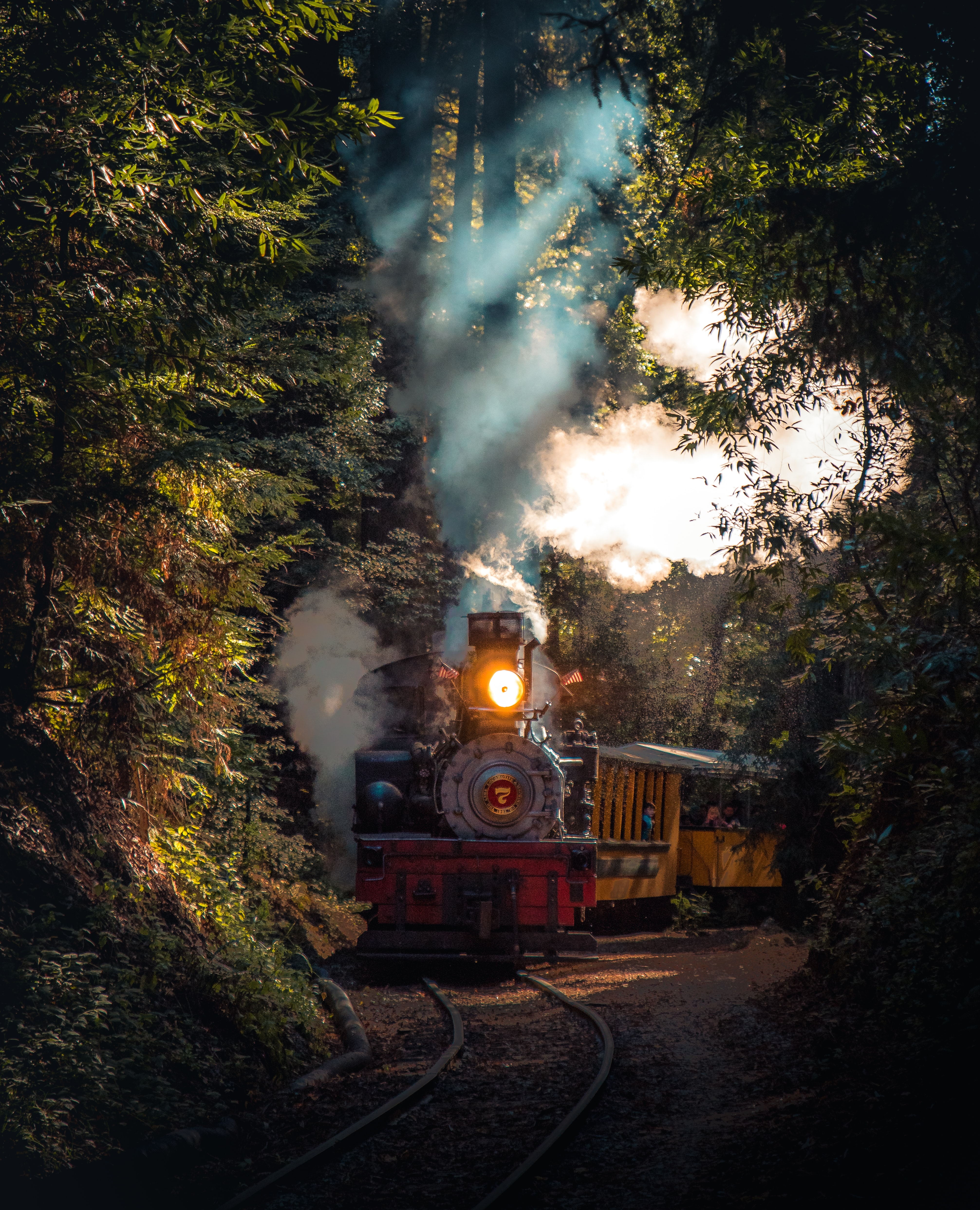 gray and red train running on rail in between trees at daytime