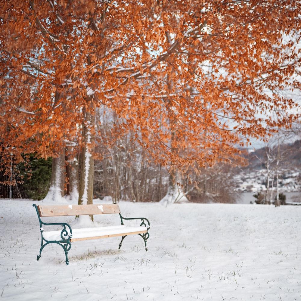 bench under orange leafed tree