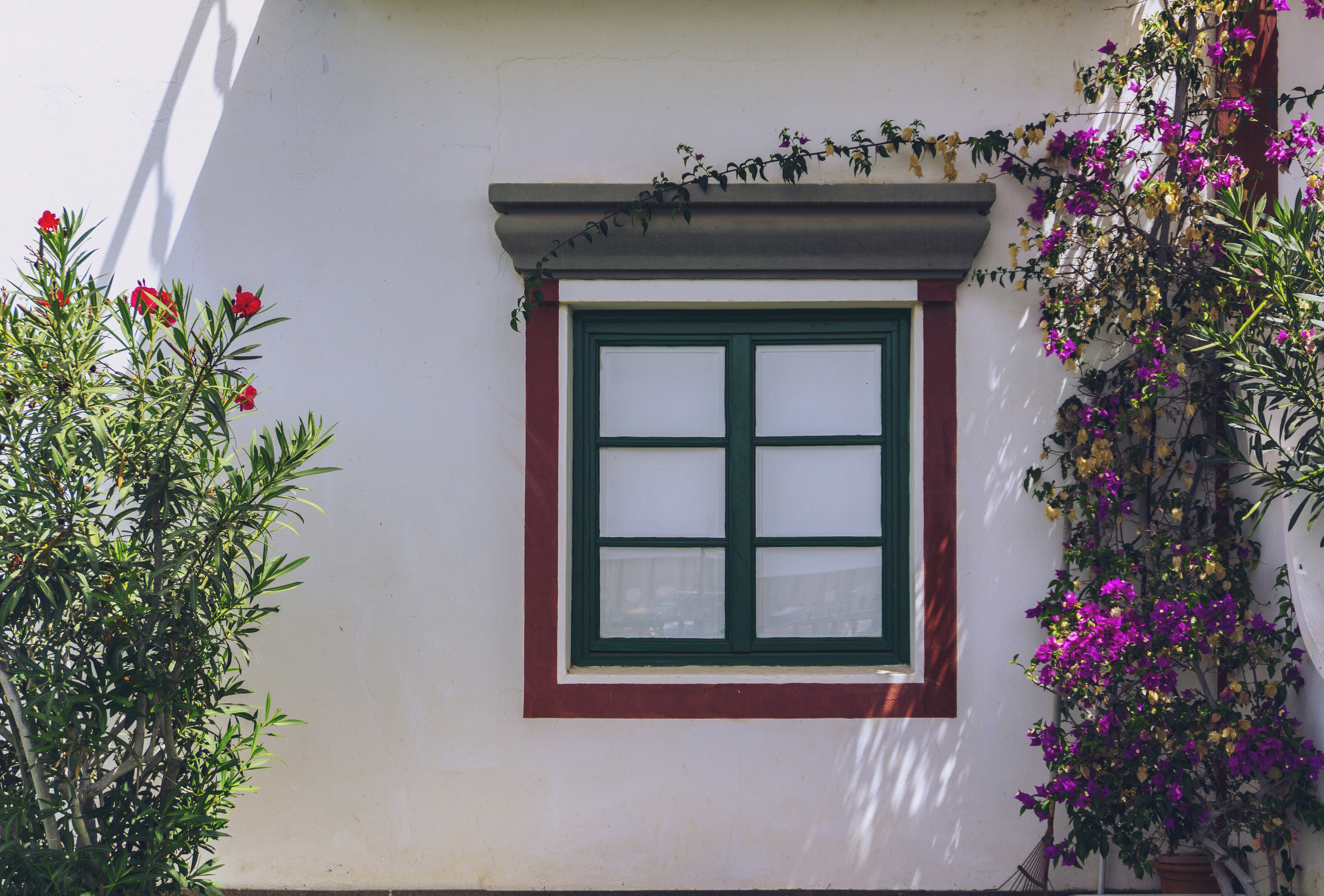 window with green frame beside crawling plants