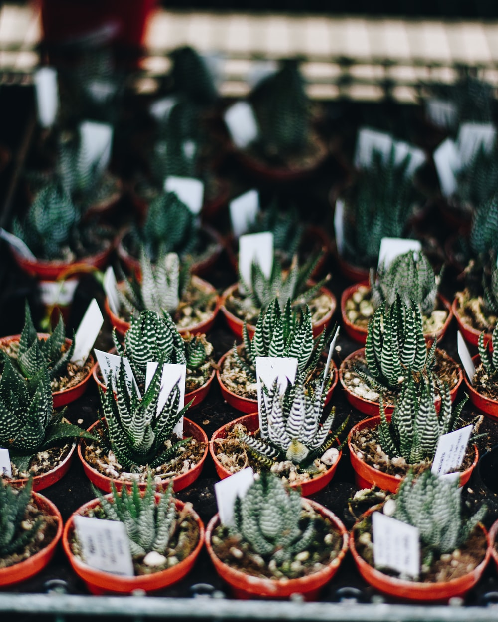selective focus photo of aloe vera plants