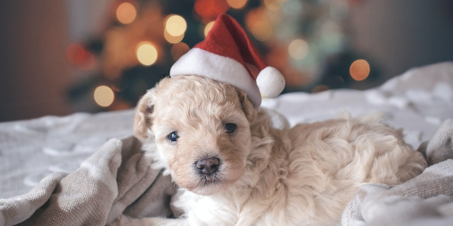 This Year, Consider Spending Christmas With Your Favorite Furry Friend