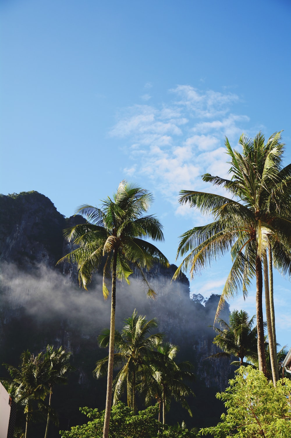 low angle photography of coconut trees under white clouds at daytime