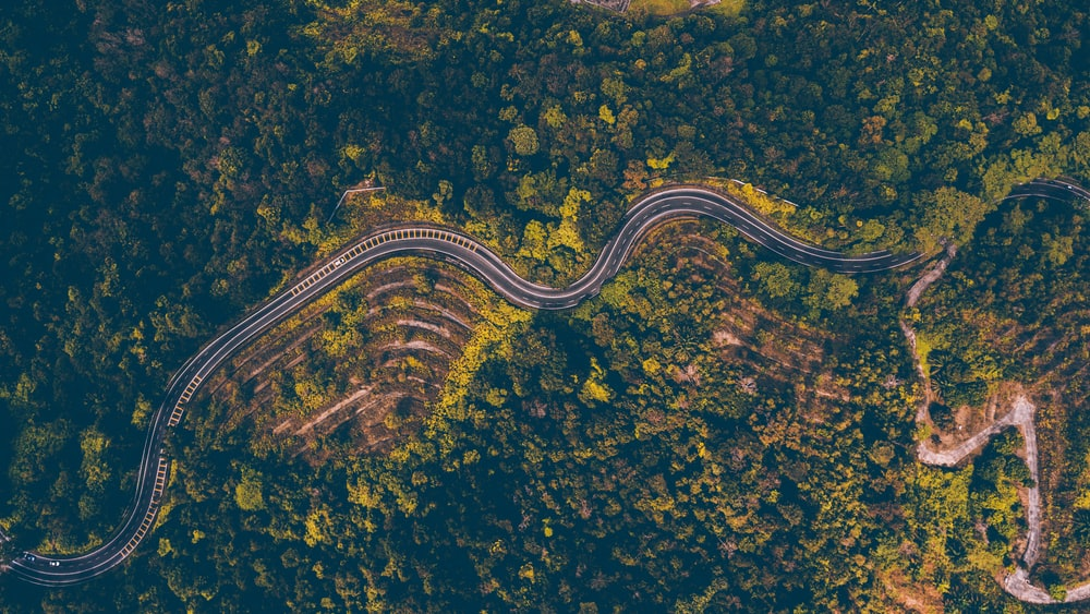 aerial photography of road surrounded with green trees