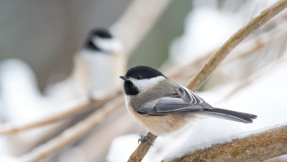 shallow focus shot of gray and brown bird
