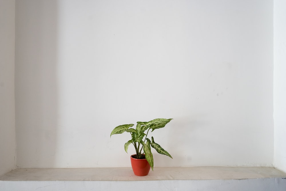 green plant on cermaic pot