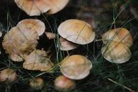 closeup photo of mushrooms
