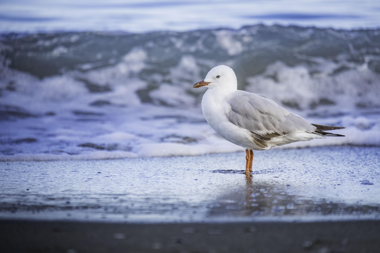 white and gray bird on seashore during daytime