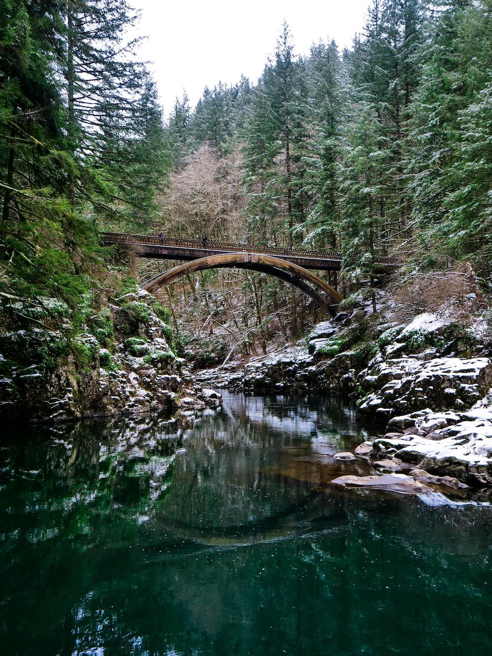 bridge between trees and lake at daytime