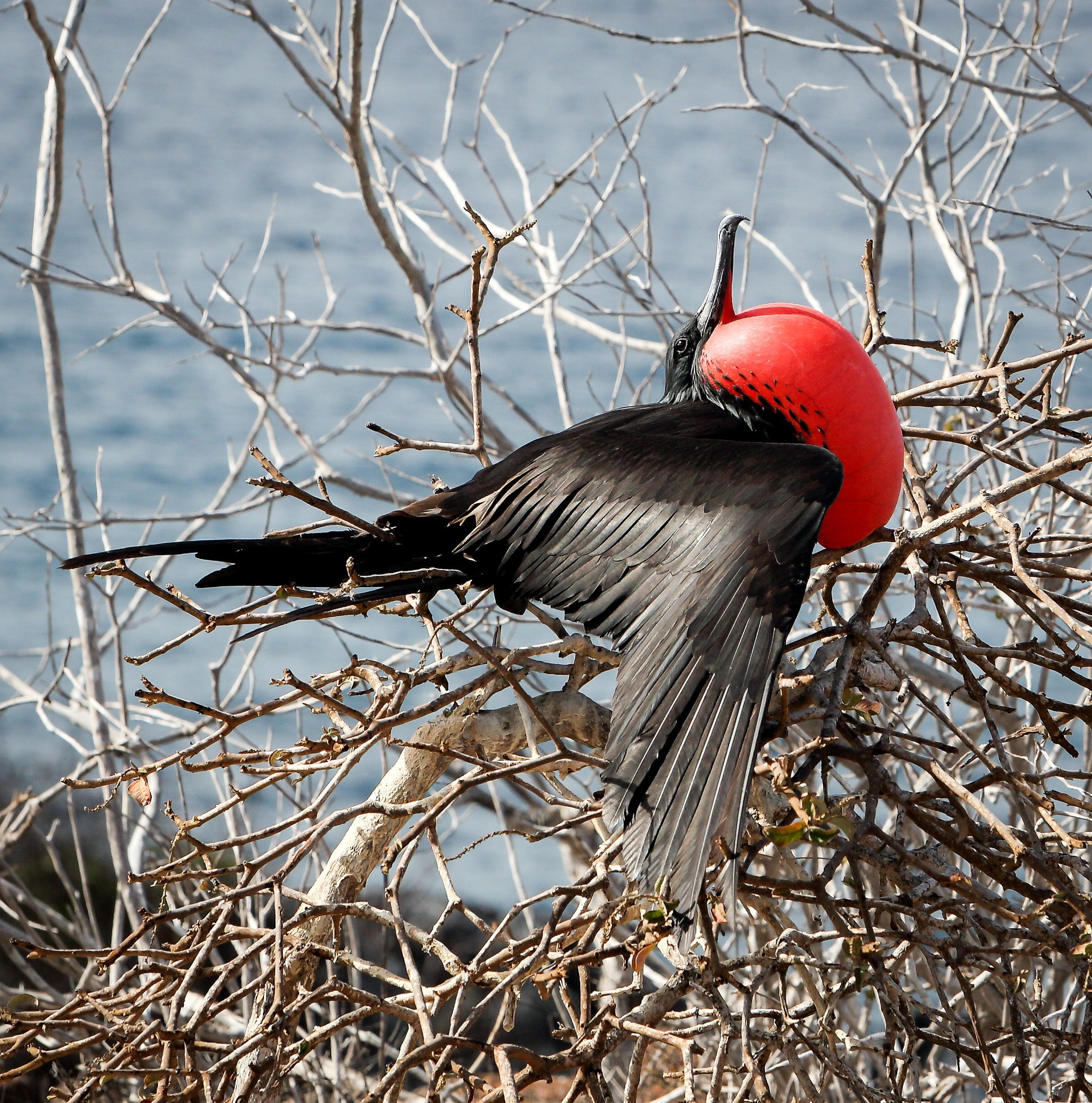black and red bird on tree branch