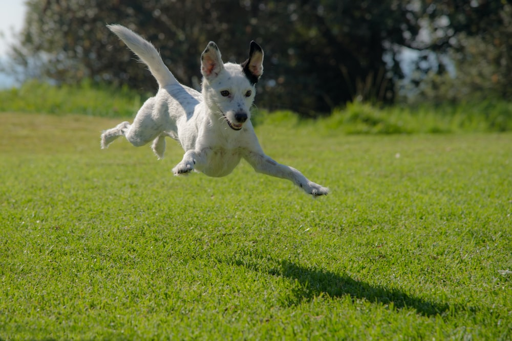 dog jumping on lawn during daytime