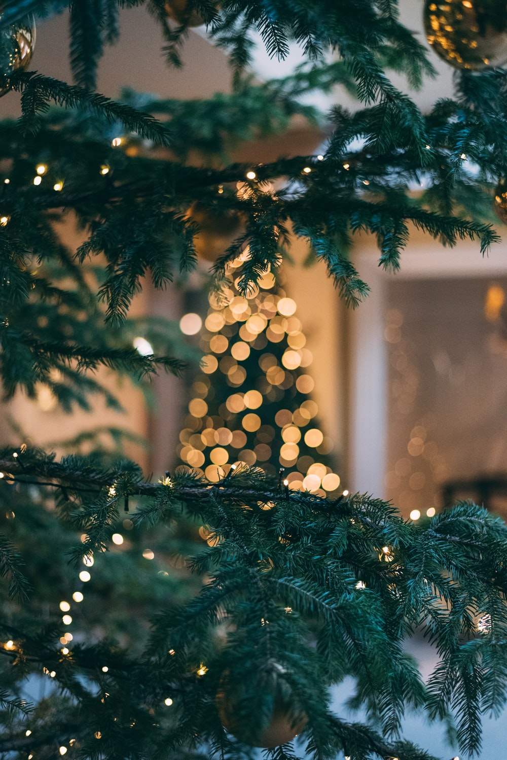Christmas tree with string lights photo free christmas image on unsplash - Tree images free download ...