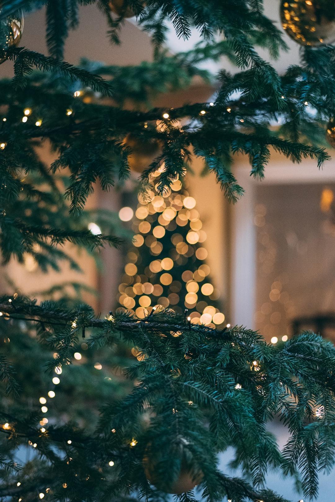 praying mantis eggs on christmas tree