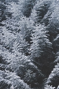 aerial photography of white trees