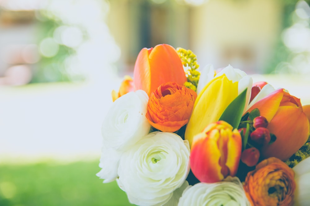 closeup photography of white and orange petal flowers