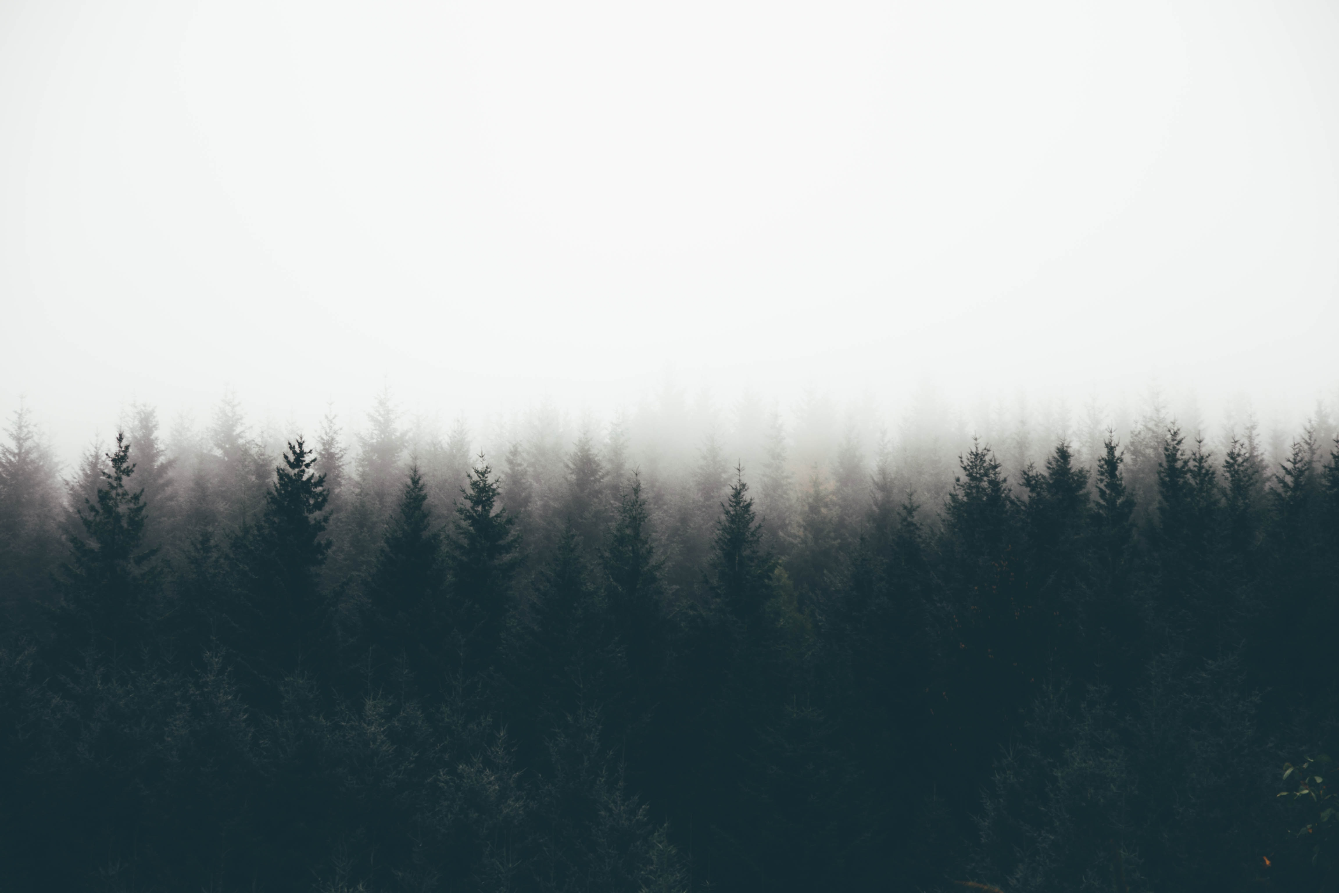 silhouette of trees covered by fogs