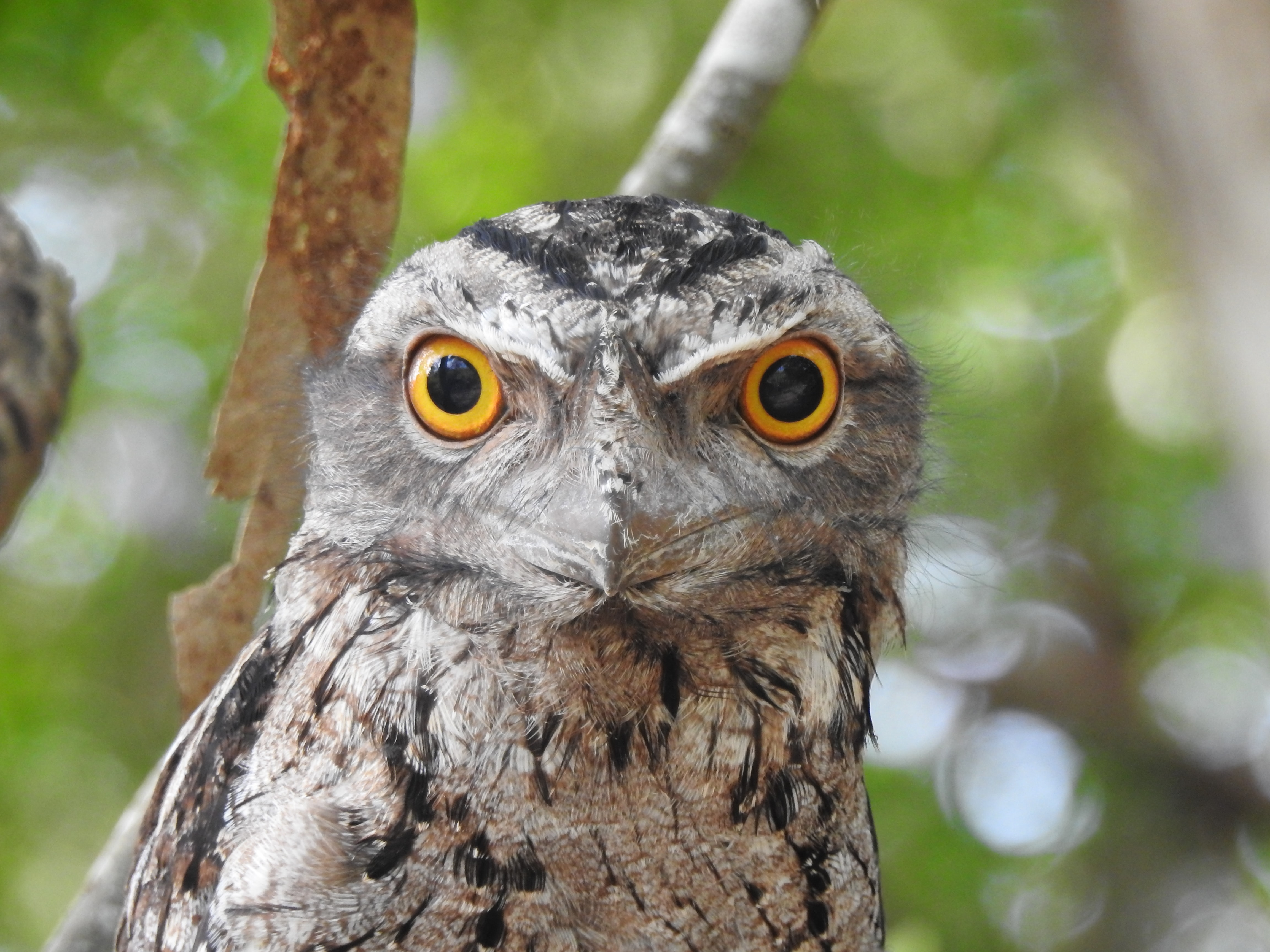 selective focus photography of owl