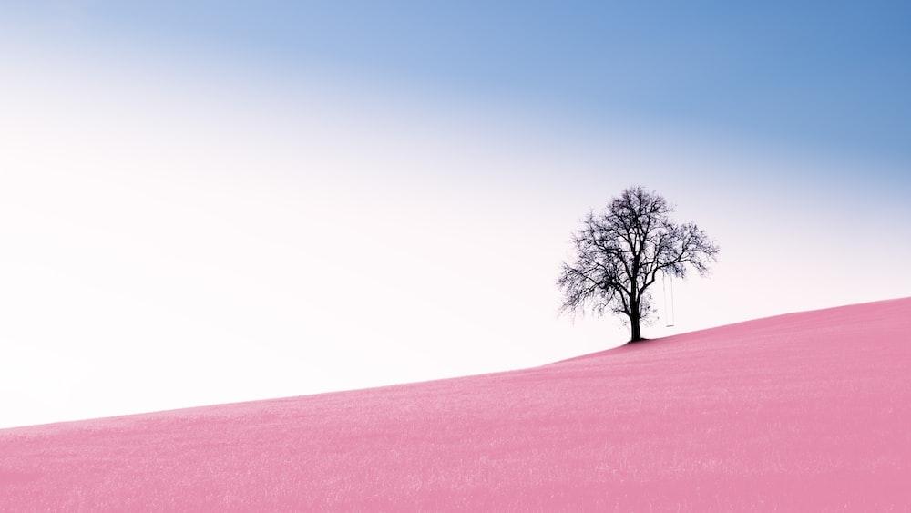tree on desert