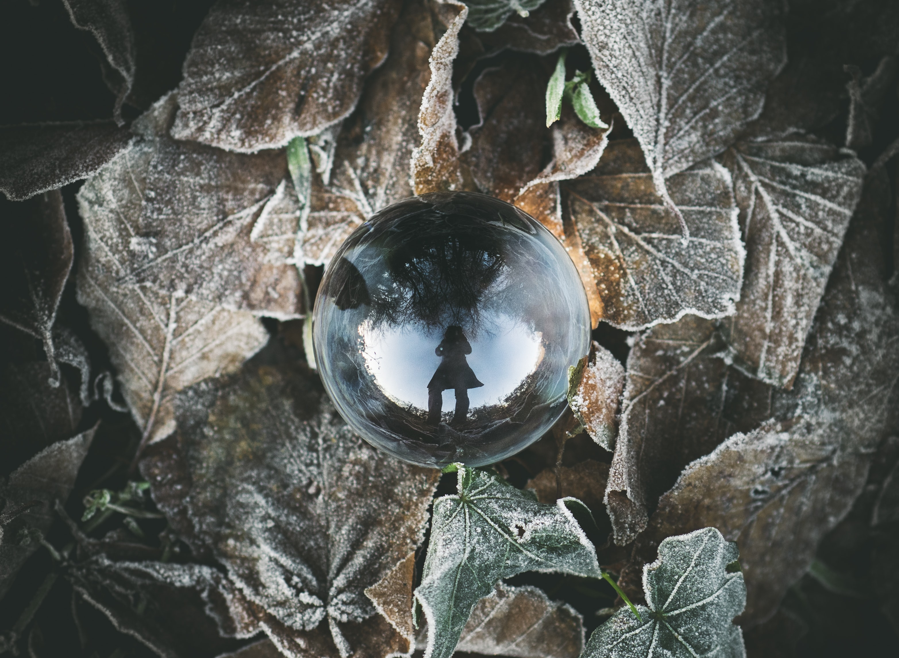 clear crystal ball on leaves