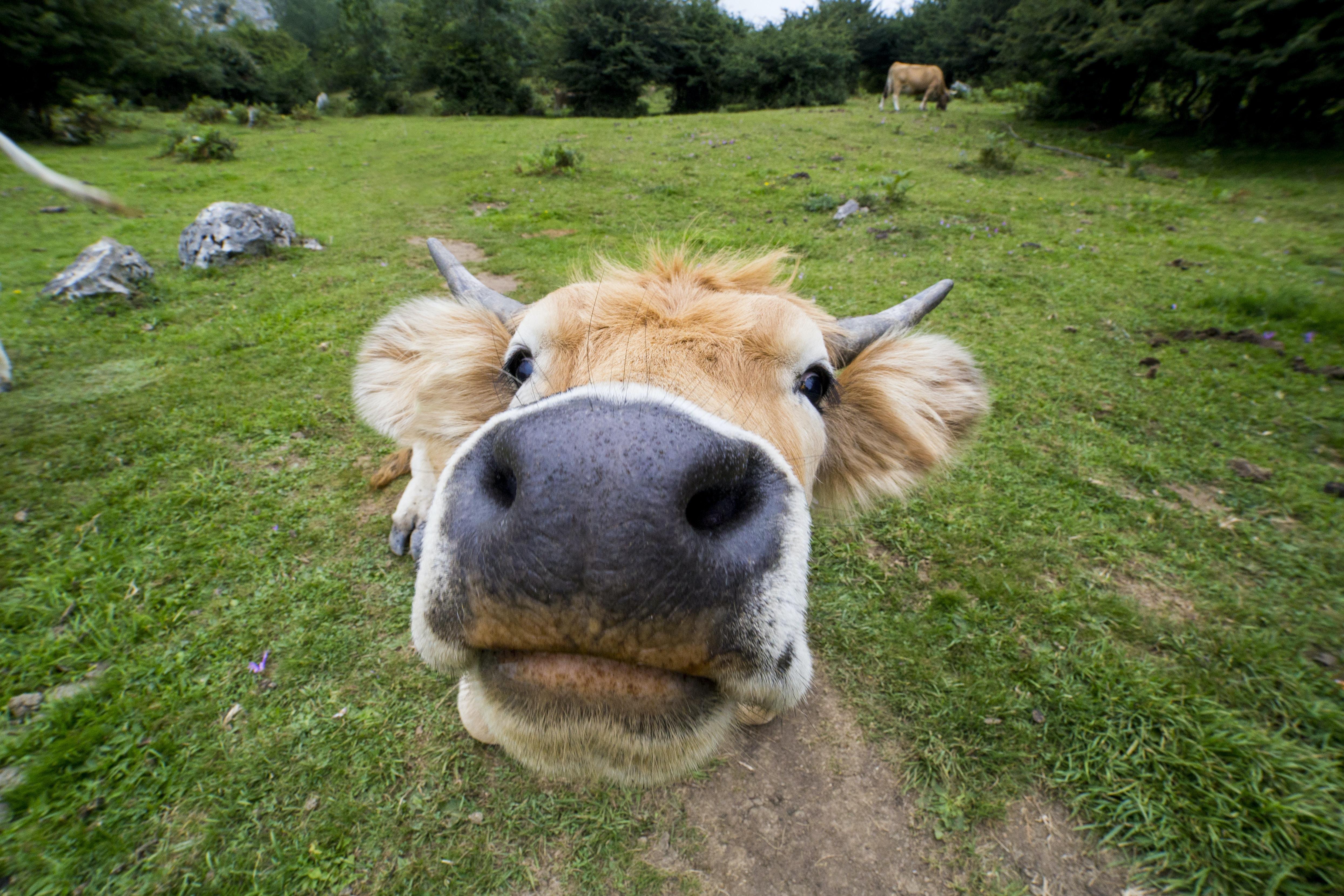 close-up photo of brown animal during daytime