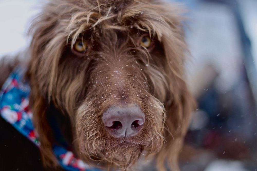 selective photography of short haired brown dog