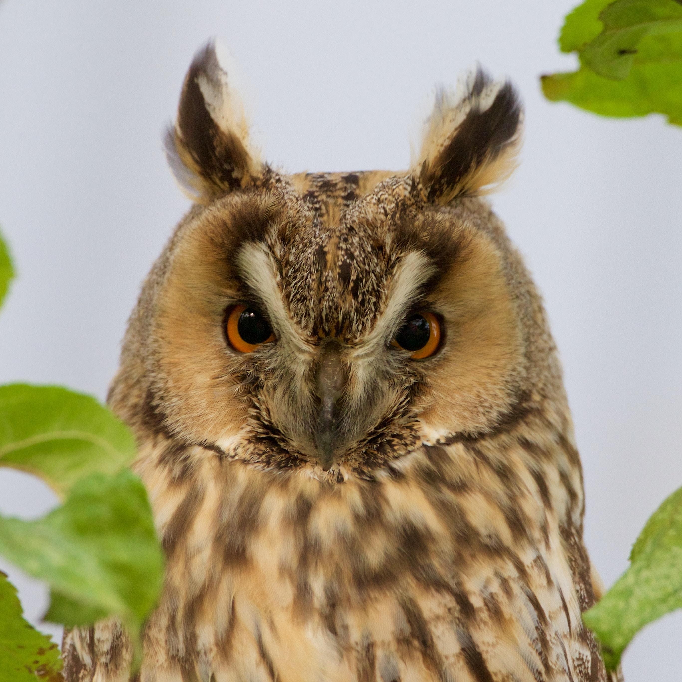 brown owl in tilt-shift photography
