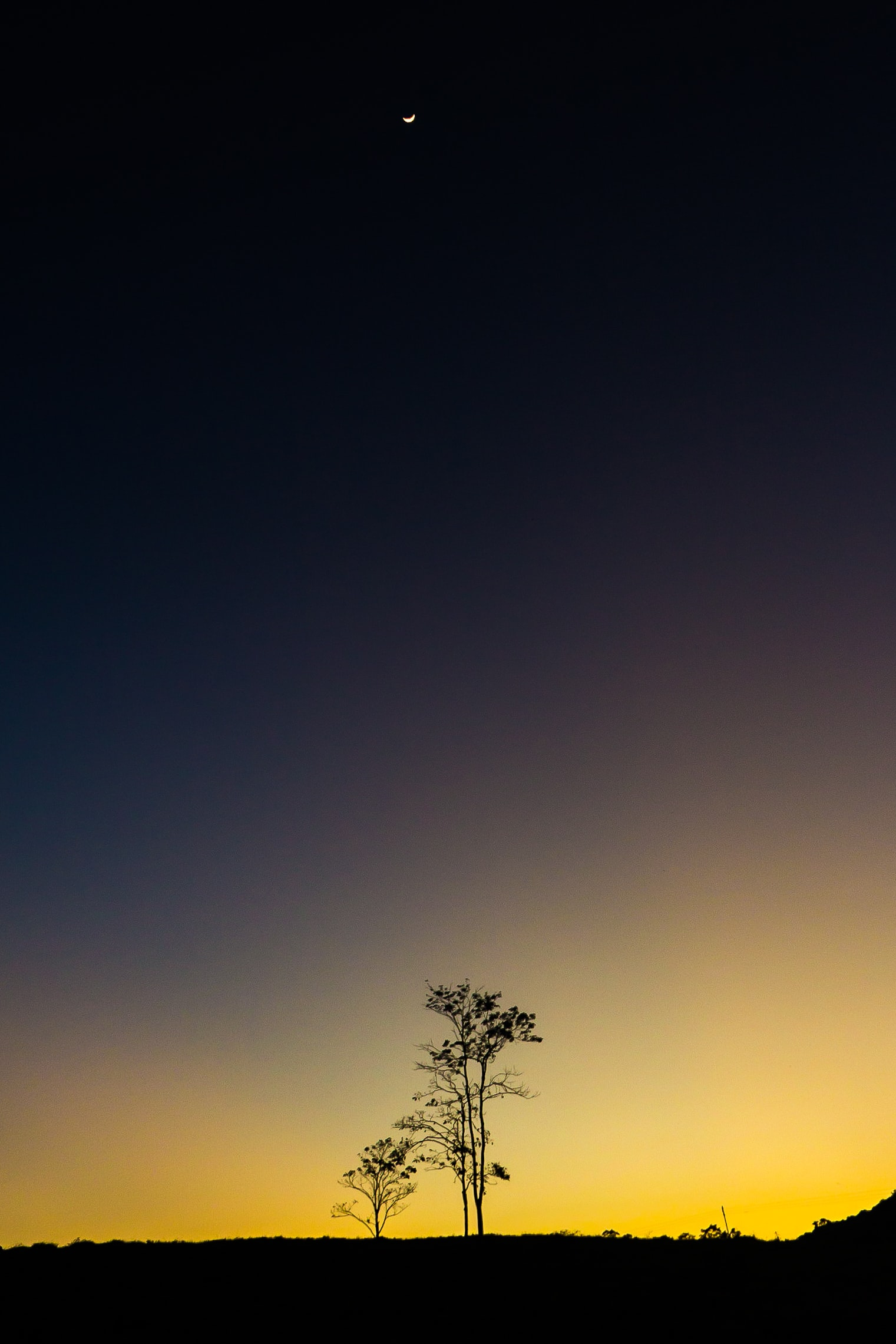 silhouette photography of tree during nighttime