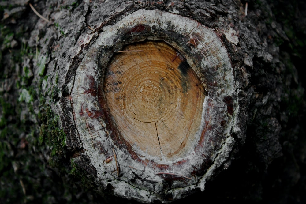 brown hole of tree trunk