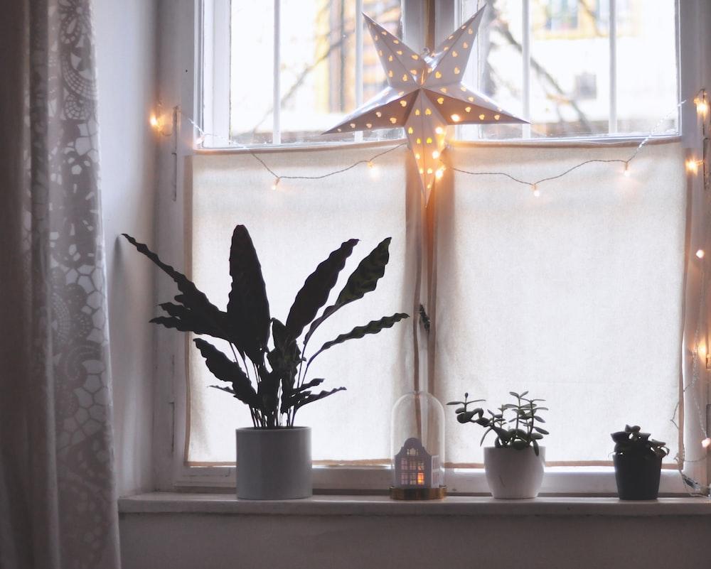 three green plants in vase beside windowpane