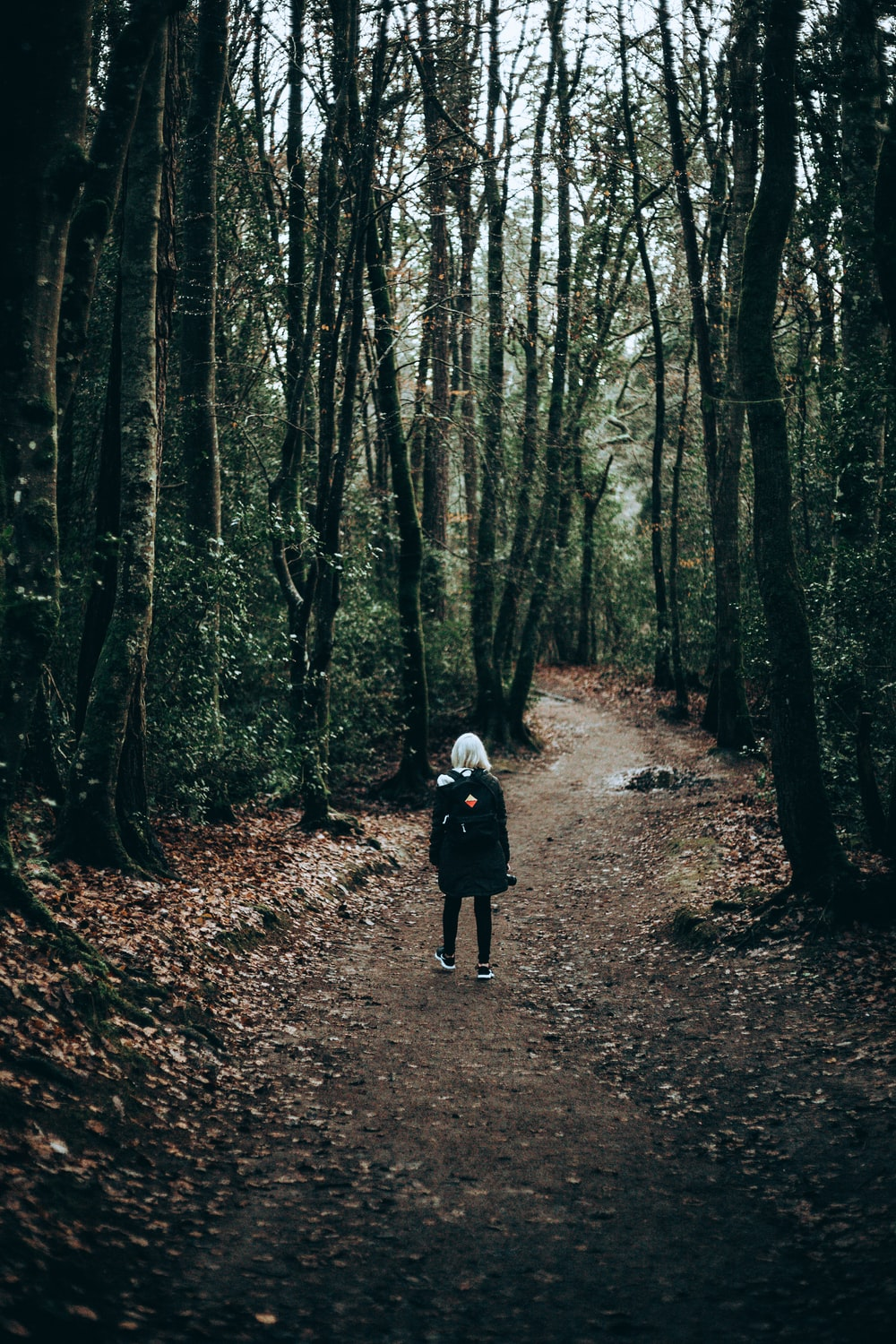person standing in forest during daytime