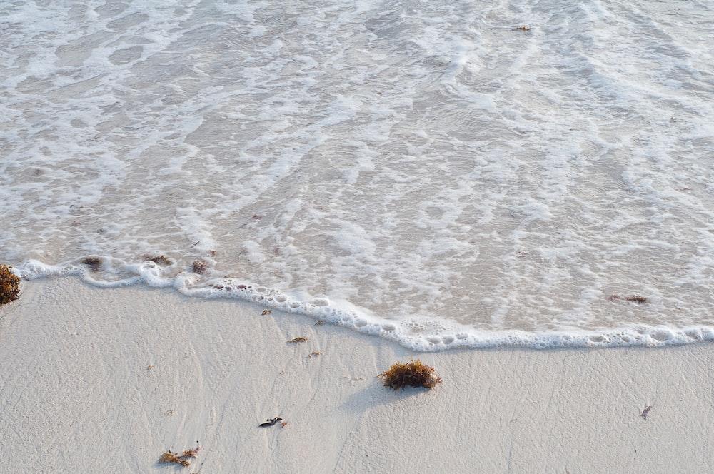 seaweeds on beach shore
