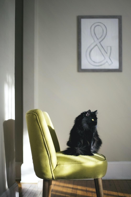 black cat sitting on green sofa hit by sun light