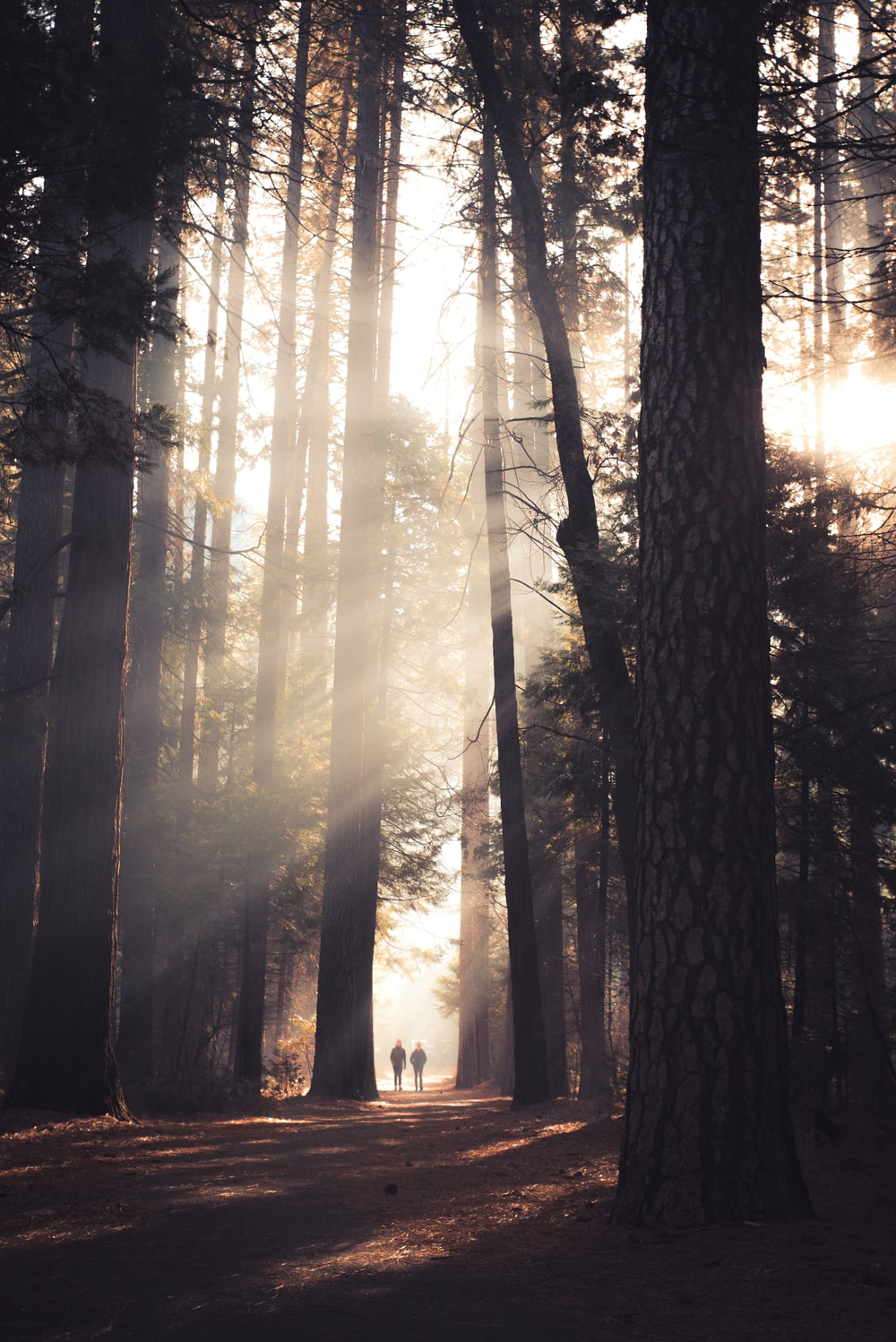 two person walking in the middle of tall trees