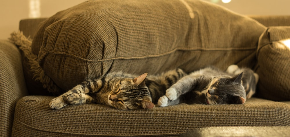 cats sleeping on brown couch