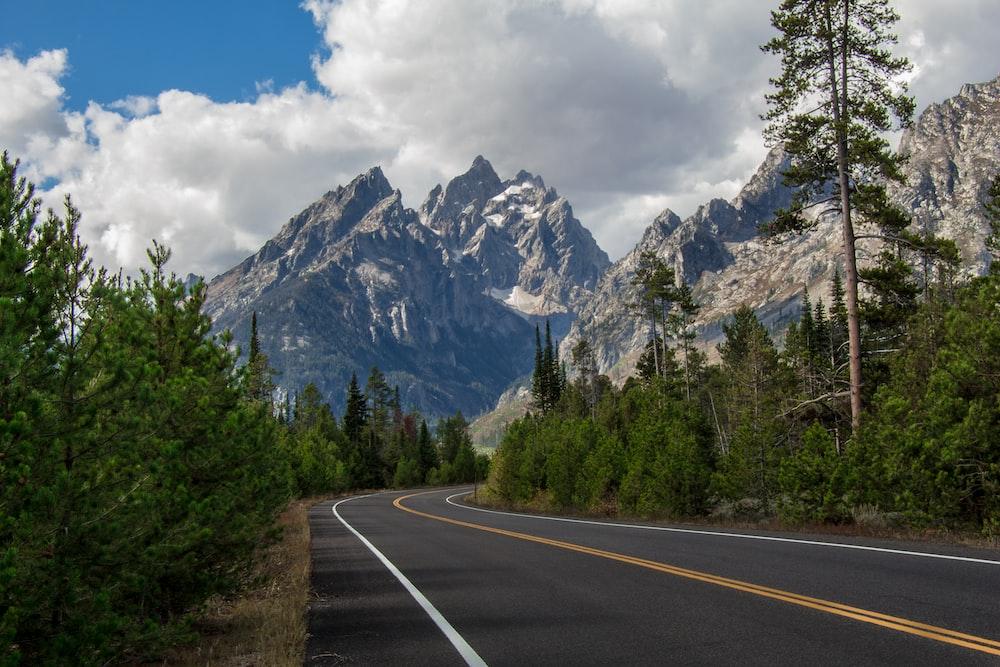empty asphalt road between tress