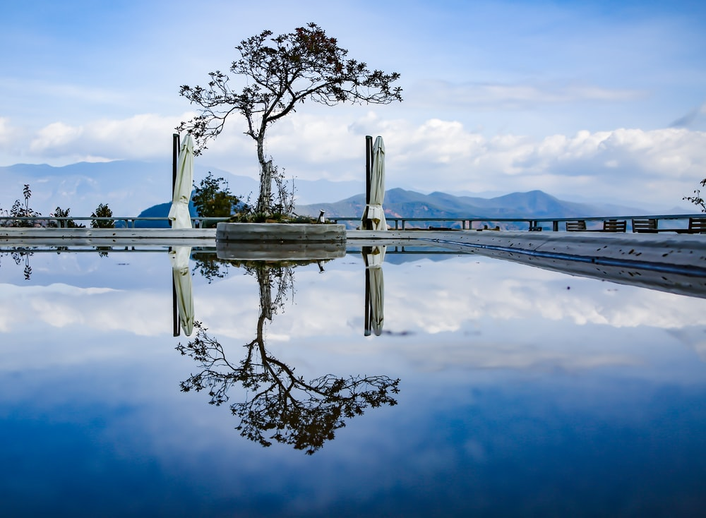 tree beside body of water during day time