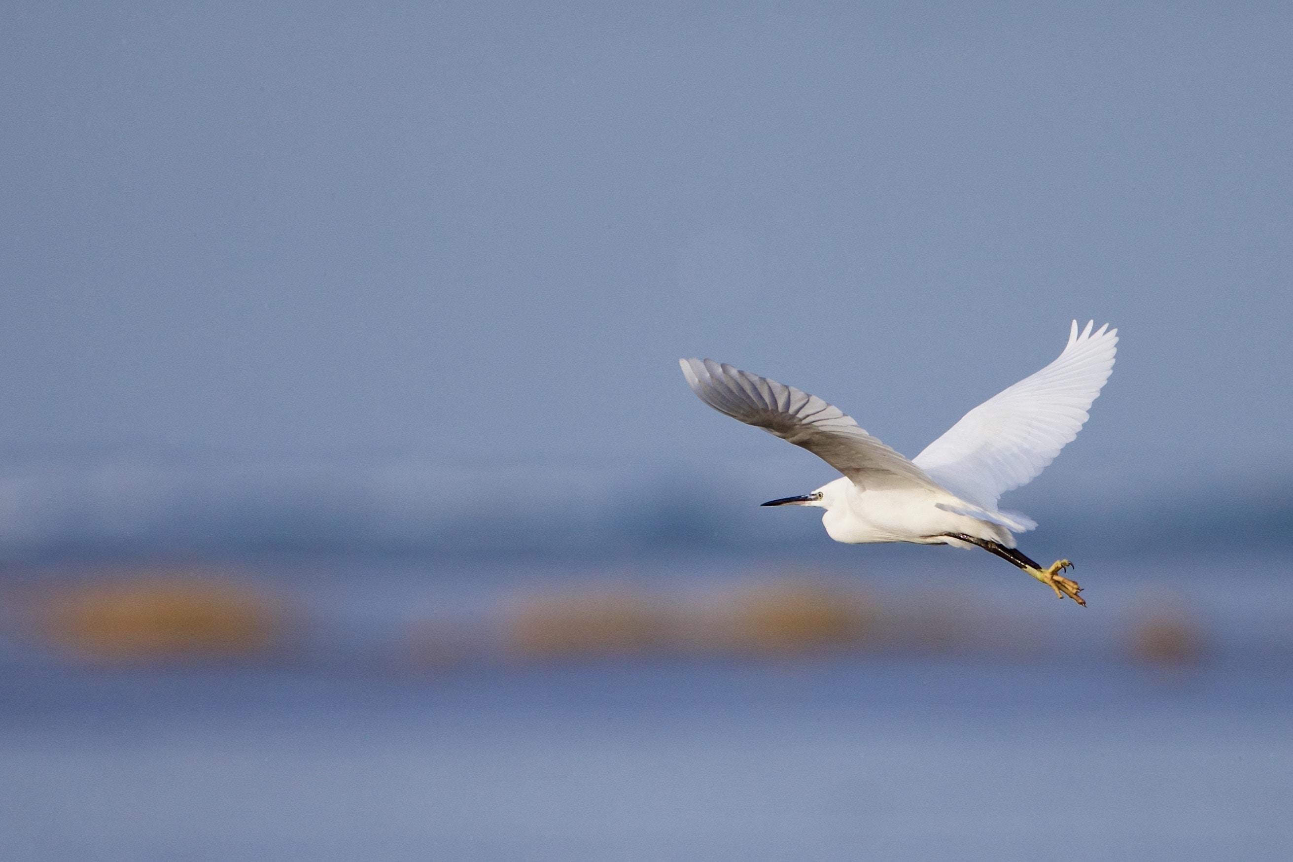 white bird flying over water